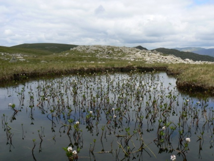 The beautiful flowery tarn on Thunacar Knott