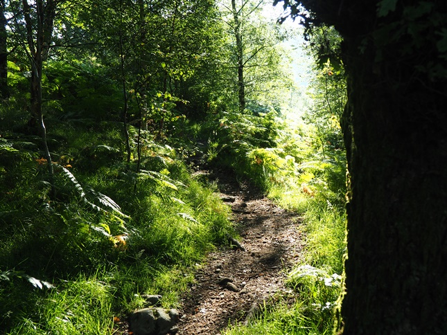 The lovely wooded path at the start of the climb