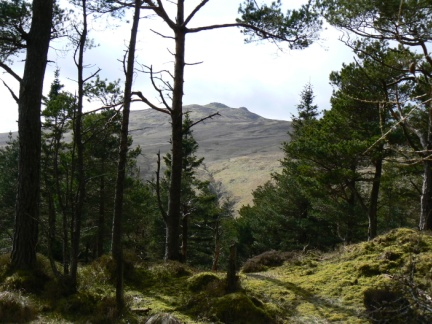 A glimpse through the woods of High Seat