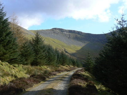 Looking along the forest road back up to Hobcarton Crag