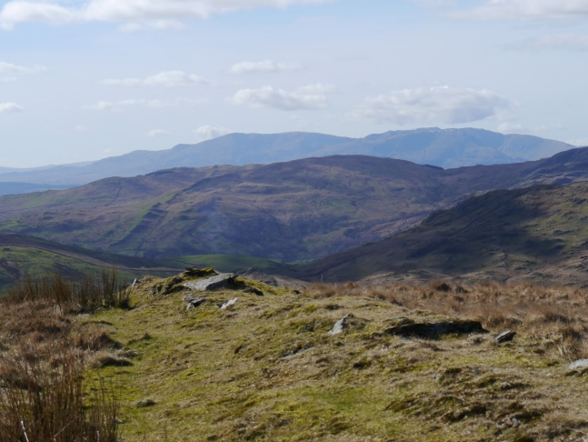 Sallows backed by the Coniston Fells