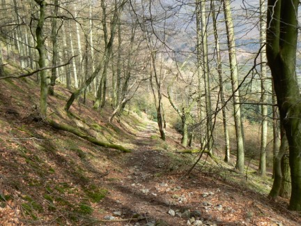 Looking back down the steep woodland path up Smaithwaite Banks