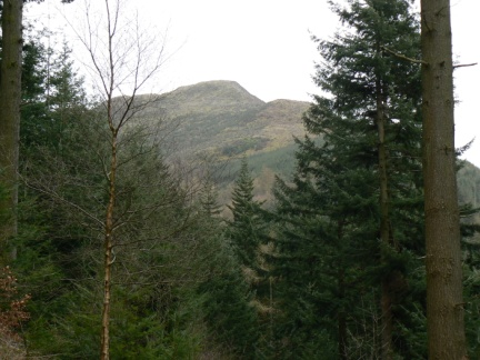 A glimpse through the trees of The Dodd