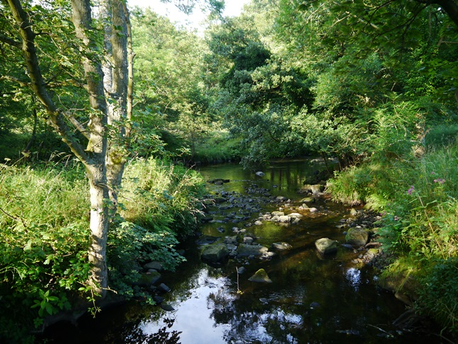 The confluence of Darley Beck with the River Nidd