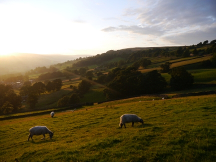 Late evening sunshine in Nidderdale