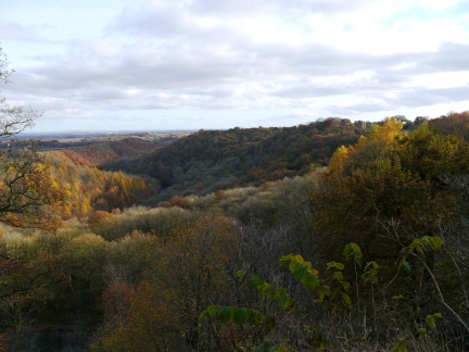 Looking down over Hackfall Woods