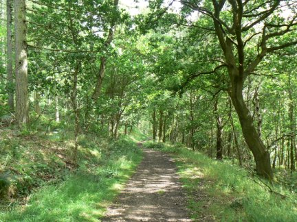 The path through Lindley Wood