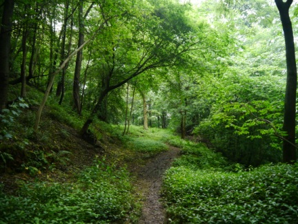 The woodland of Mickley Barras