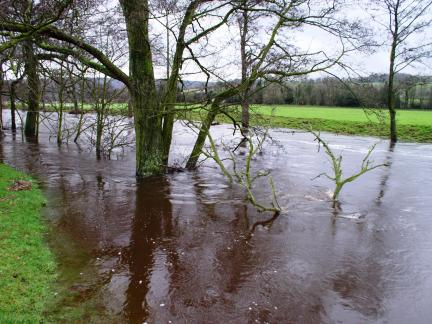 The Nidd in flood