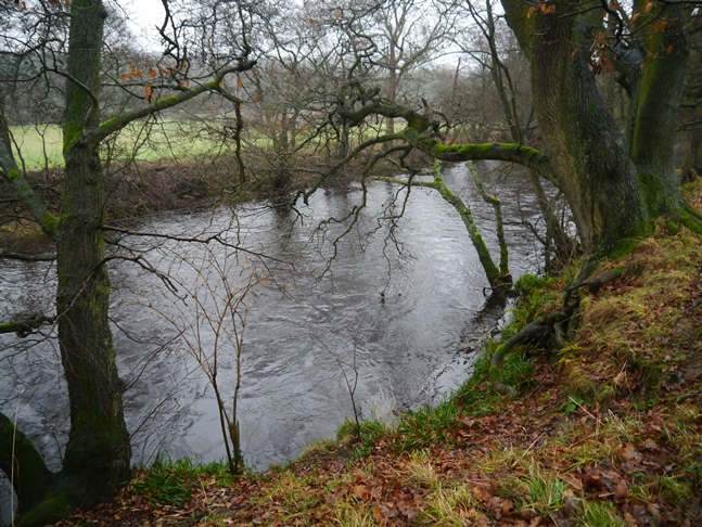 The River Nidd between Birstwith and Hampsthwaite