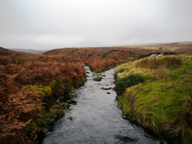 Harden Gill Beck joining the River Washburn
