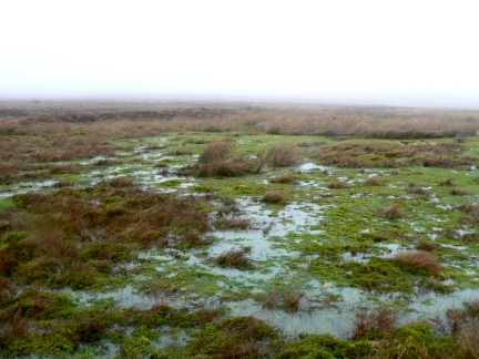 A particularly wet looking bog