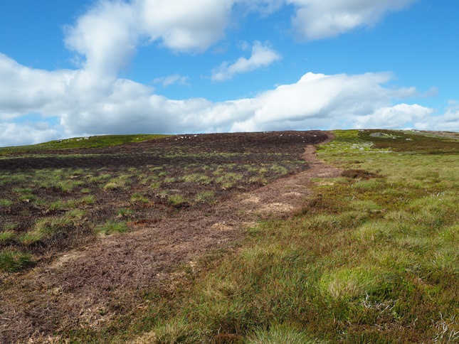 Using a fire break in the heather to reach the top of Harnisha Hill