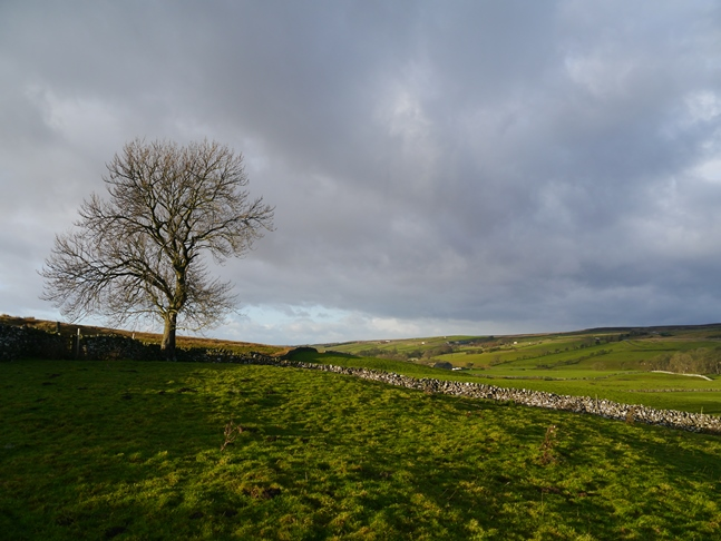 A lonesome tree near the foot of Gilmonby Moor