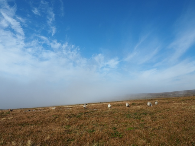 About to re-enter the cloud as we dropped down from Murton Fell