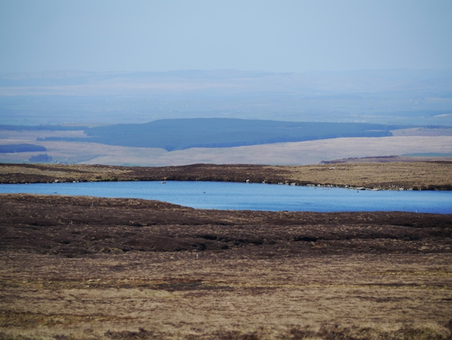 Whitfield Lough from Pike Rigg