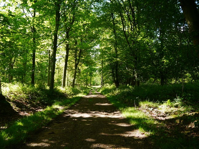 The path through Abbey Bank Woods