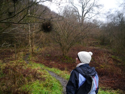 Lisa and a low bird's nest in Garbutt Wood