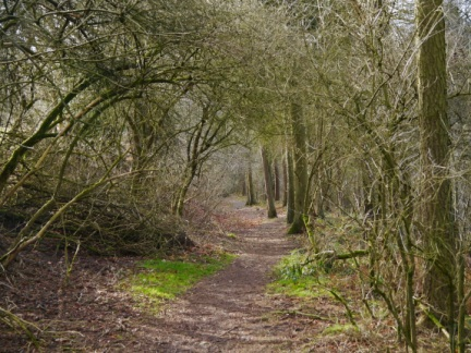 A pleasant woodland path