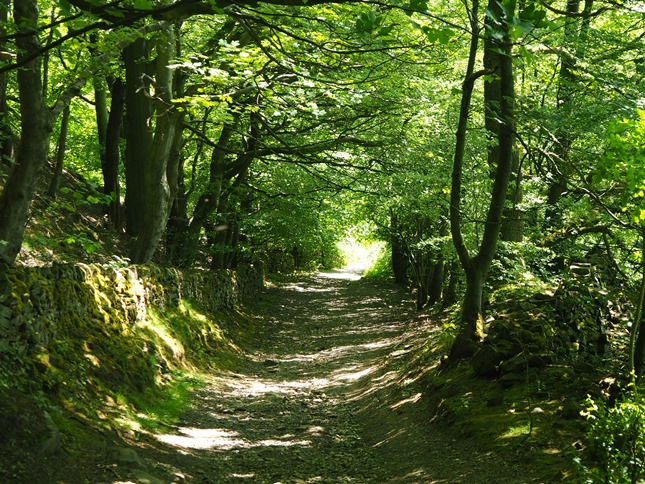 The leafy byway descending back in to Eyam