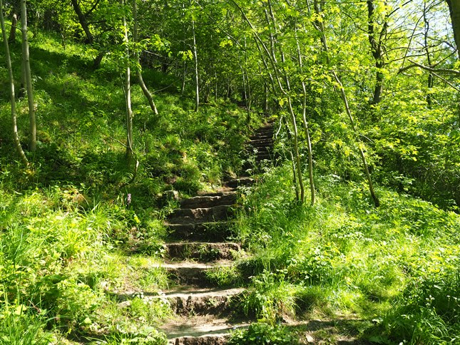 The steep steps climbing up the other side of Cales Dale
