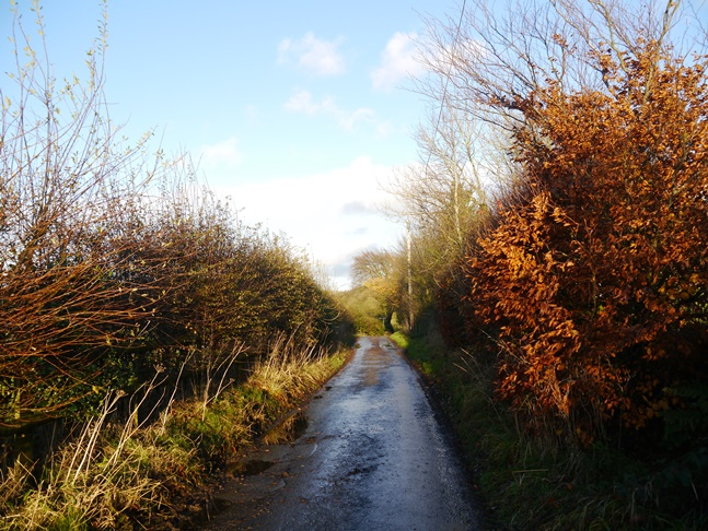 The colorful minor road leading back to Macclesfield Forest