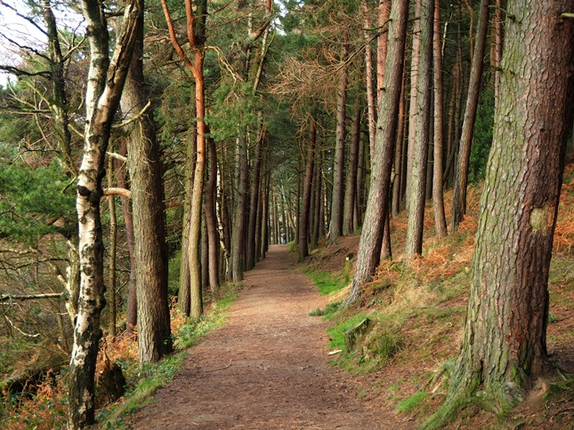 The wooded path along Langsett Bank