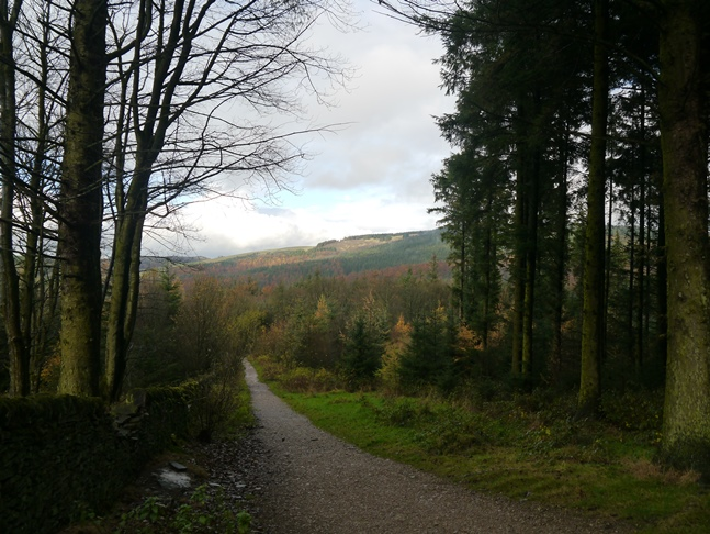 Looking back down the path climbing up through Macclesfield Forest