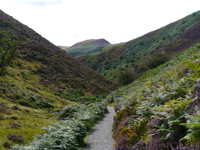 Looking along the Carding Mill Valley towards Burway Hill