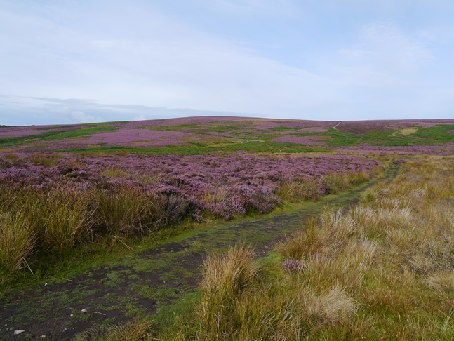 Nearing Pole Bank, the highest point of the Long Mynd