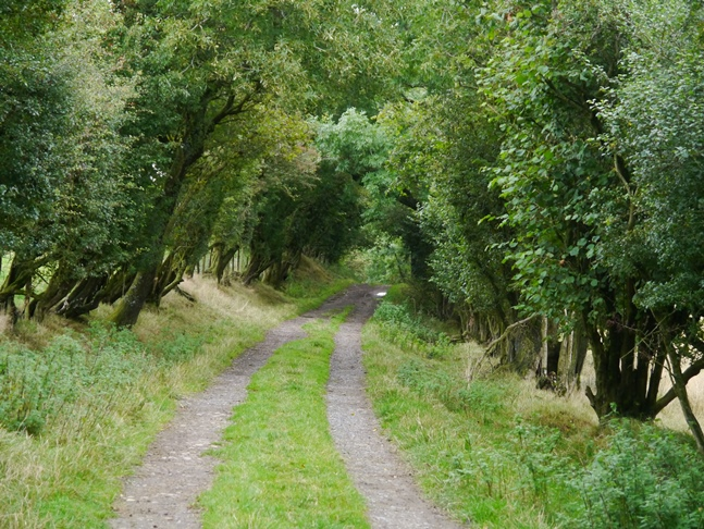The tree lined track heading towards Willstone