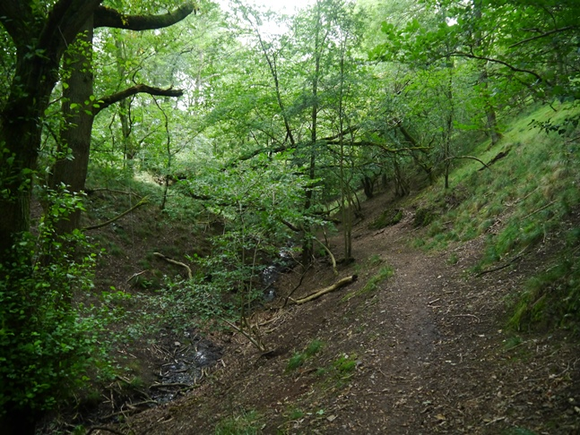 The Jack Mytton Way as it passes through Plocks Coppice on the slopes of Hazler Hill
