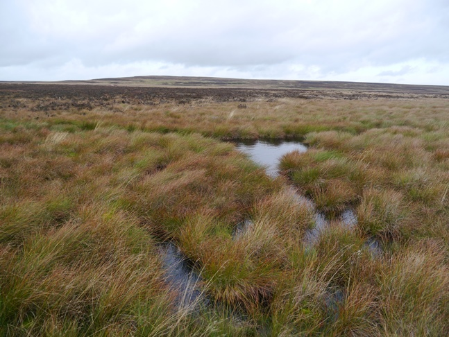 This bog was at least 2-3 feet deep