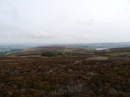 The view of Haworth Moor from above Harbour Lodge