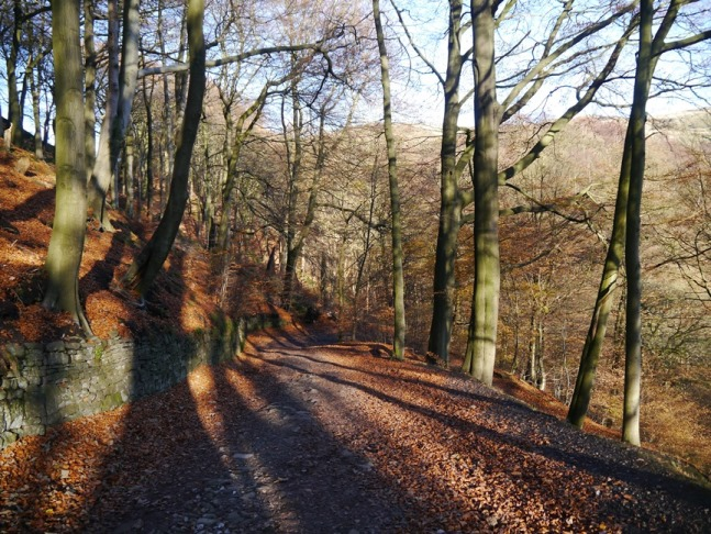 Descending on a lovely path through Kitson Wood