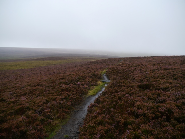 A path across Midgley Moor