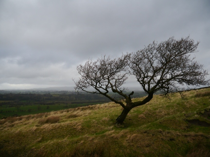 A lonely windswept tree